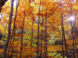 Sign of the Times -- Autum Leaves in a Woods