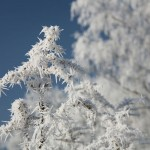 Hoarfrost on the snow weakens the bond between snow layers