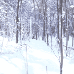 XC Skiing A Few Hours on Skinny Skis