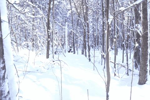 XC-Skiing Through the Woods