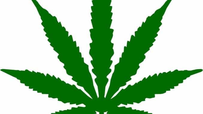 marijuana and snow