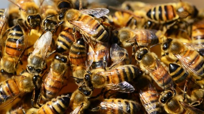 Plan Bee -- a bunch of honey bees