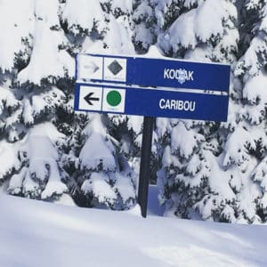 Ski Trail Signs -- Against snow covered pine trees