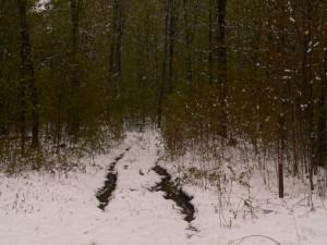Woodhunting