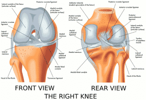 Skiing ABCs A is for Anterior Cruciate Ligament