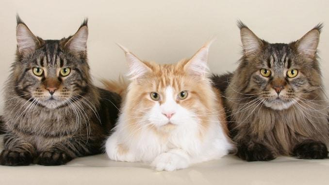 Rib Mountasin Climb -- 3 cat
